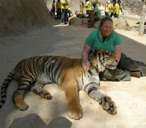 tiger11