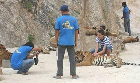 tiger9